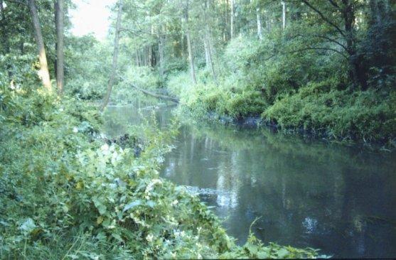 Rzeka Toczna w okolicach Patkowa