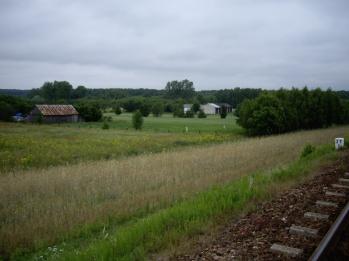 Widok z torów w kierunku lasu
