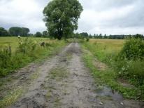 Droga na łąki