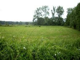 Patkowskie łąki