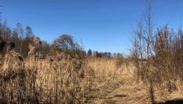 Patków Wiosna 2018 - 3